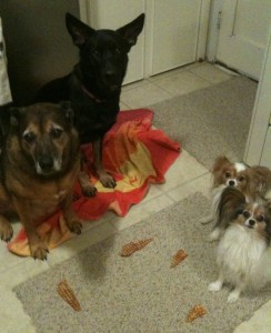 Four Dogs and their treats